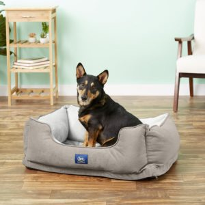 dog in Serta Orthopedic Bolster Dog Bed w:Removable Cover