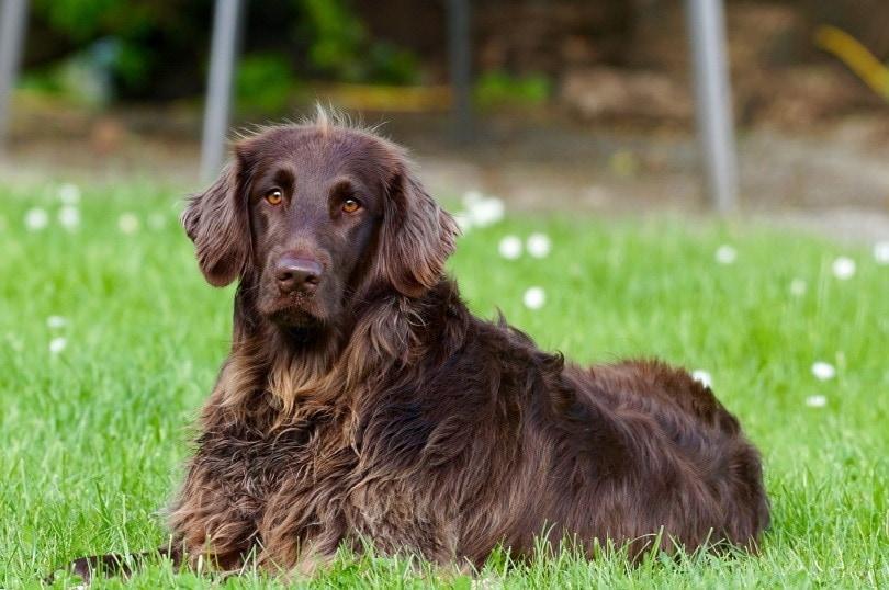 dog in grass_Hebi B._Pixabay