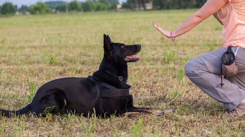 dog trainer_Luca Nichetti_Shutterstock