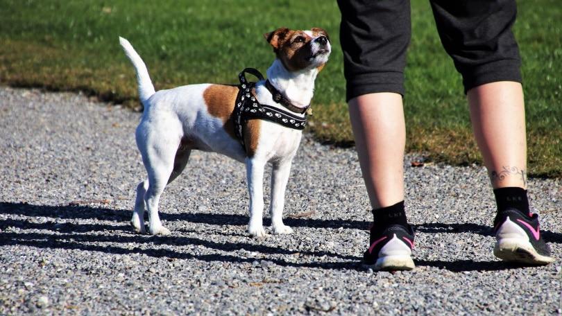 dog trainer_Piqsels
