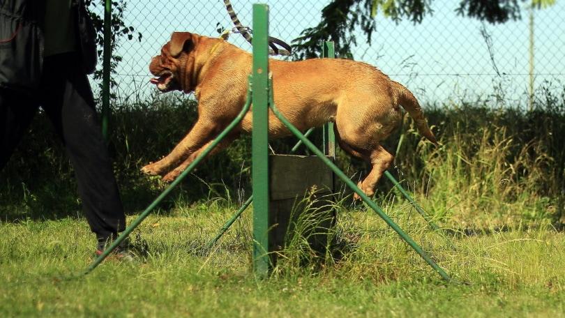 dog training outdoor_Piqsels