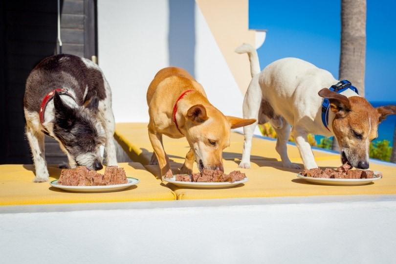 dogs eating_Javier Brosch_Shutterstock