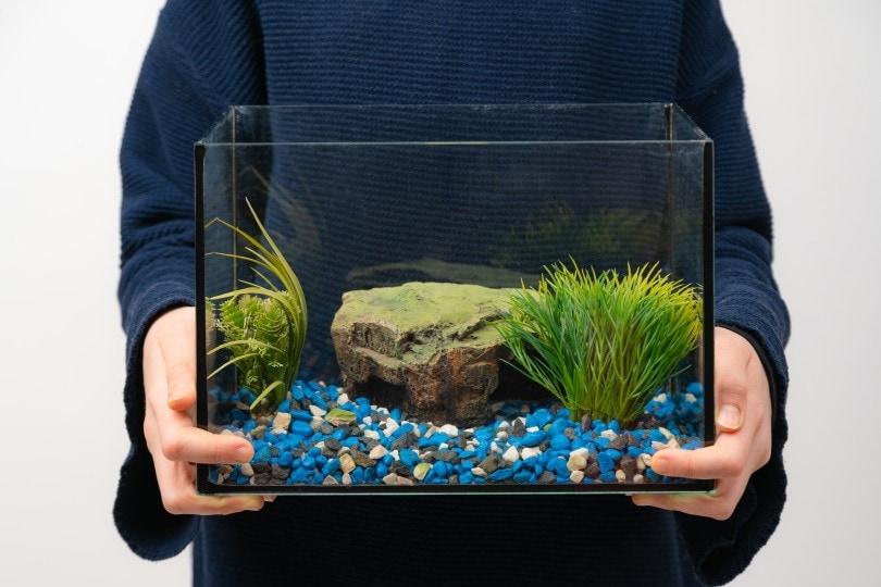 fish tank_Ja Crispy_Shutterstock