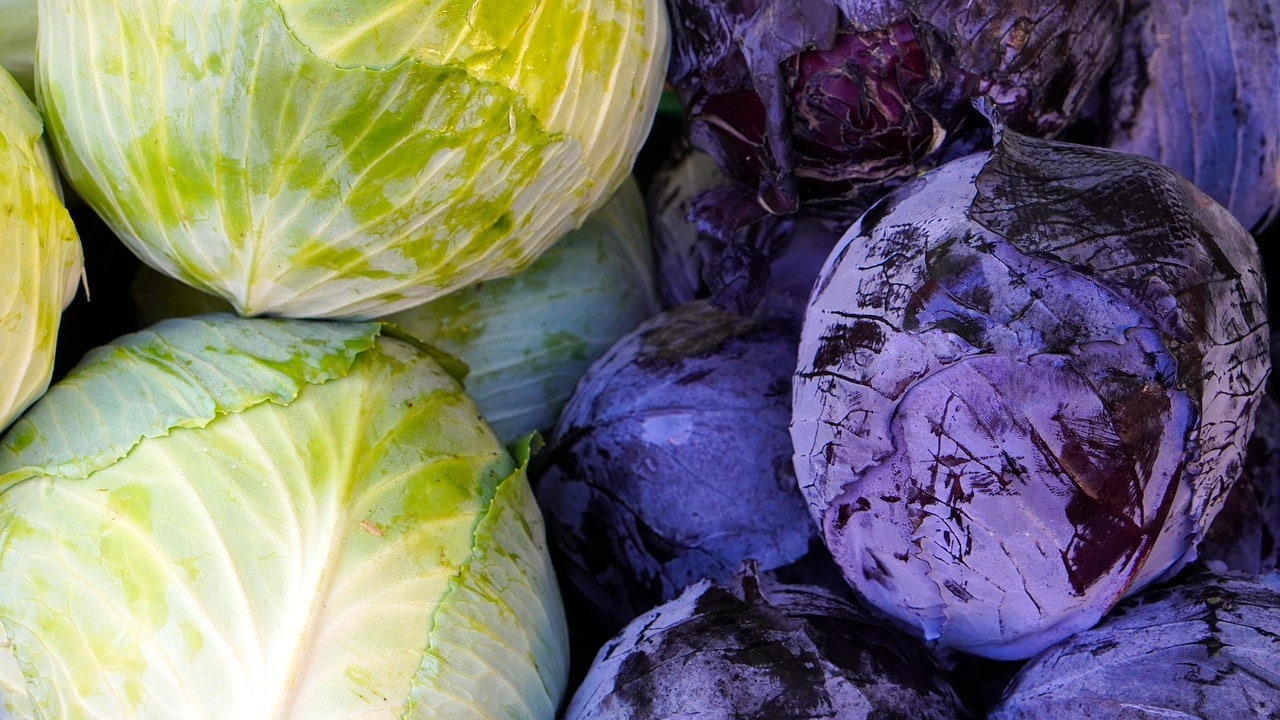 green and red cabbages
