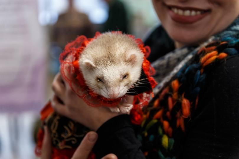 holding ferret III_Peryn22_Shutterstock