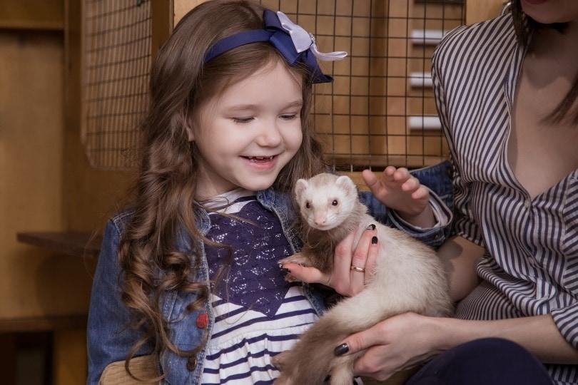 holding ferret_Nadezhda Manakhova_Shutterstock