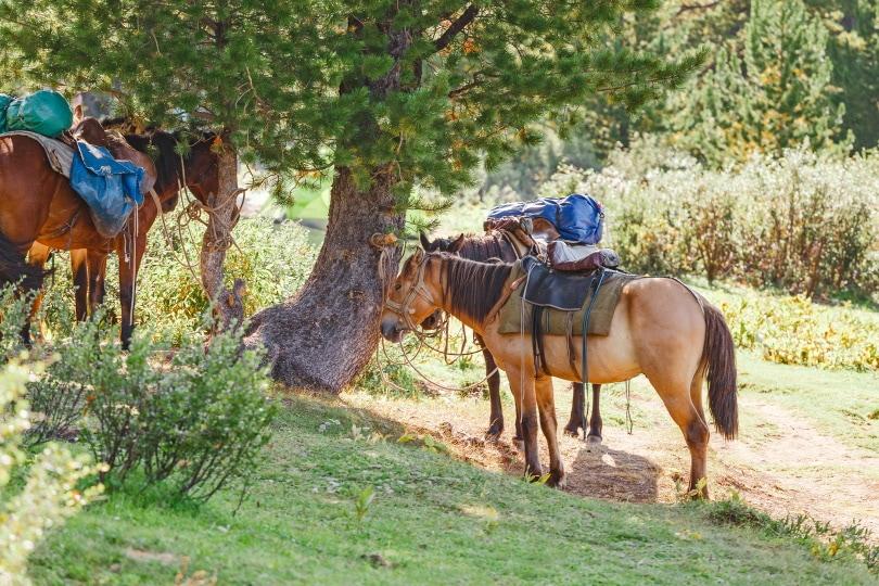 horse load_frantic00_shutterstock