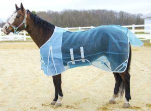 horse using Derby Originals 80-8016BL-78 Fly Sheet