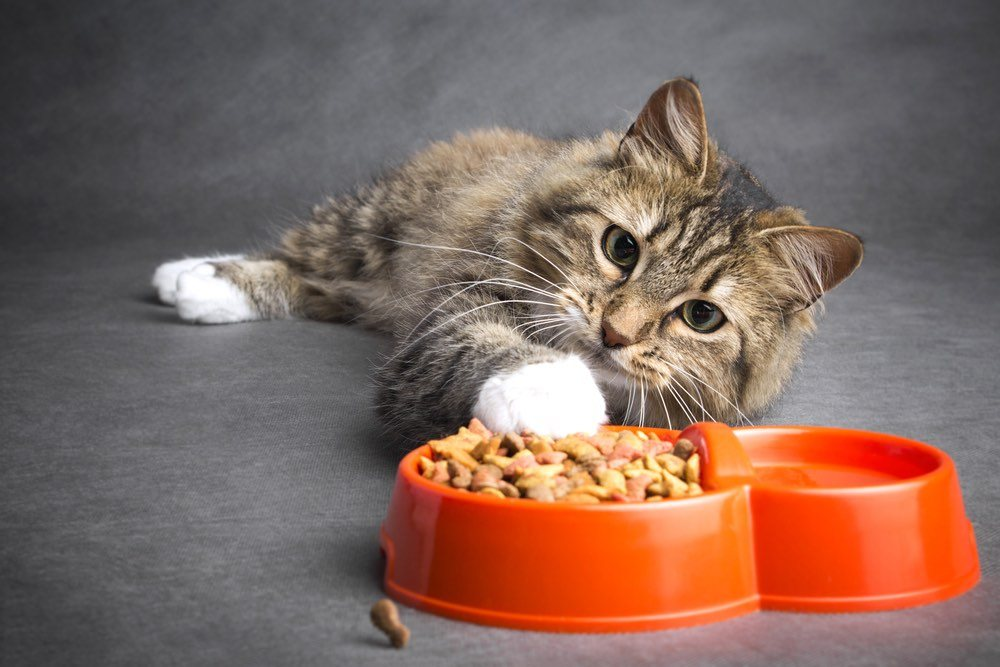 kitten with cat food