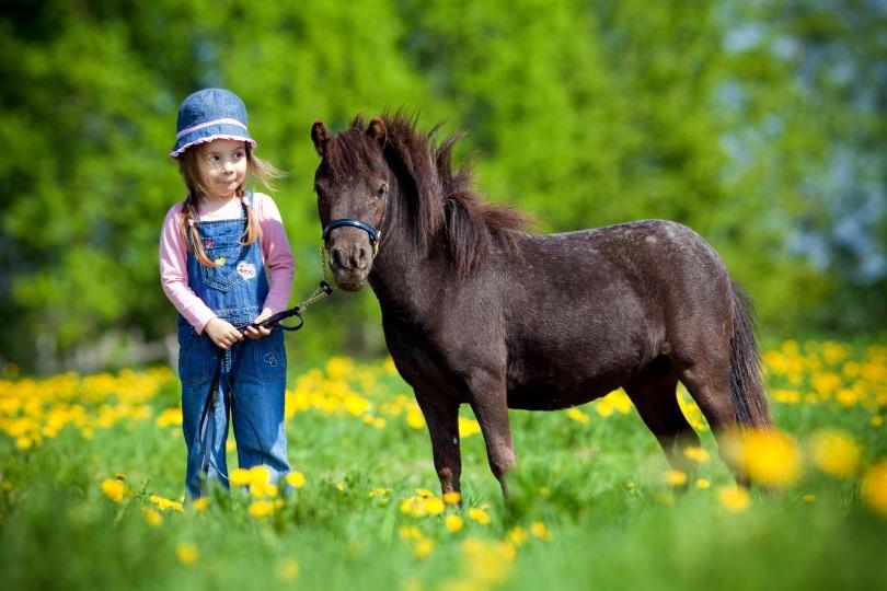 miniature horse_Alexia Khruscheva_Shutterstock