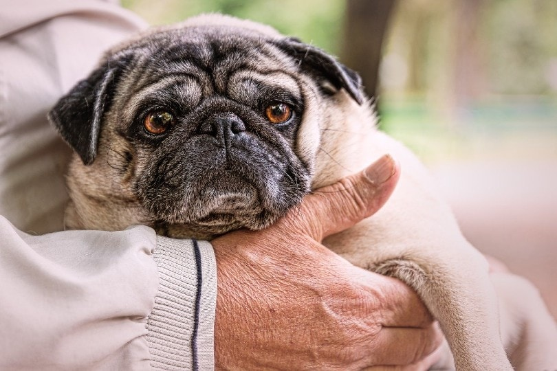 old man holding a pug