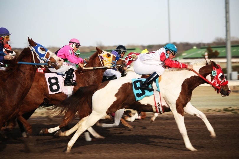 optional claiming horse race_Yenni Vance_Pixabay