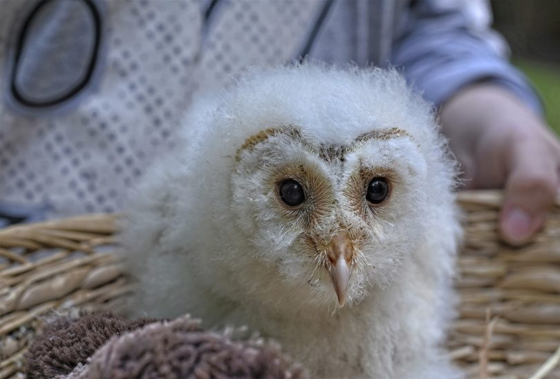 owl care_RitaE_Pixabay
