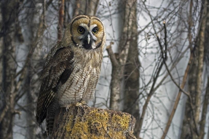 owl in wild_Georg Wietschorke_Pixabay