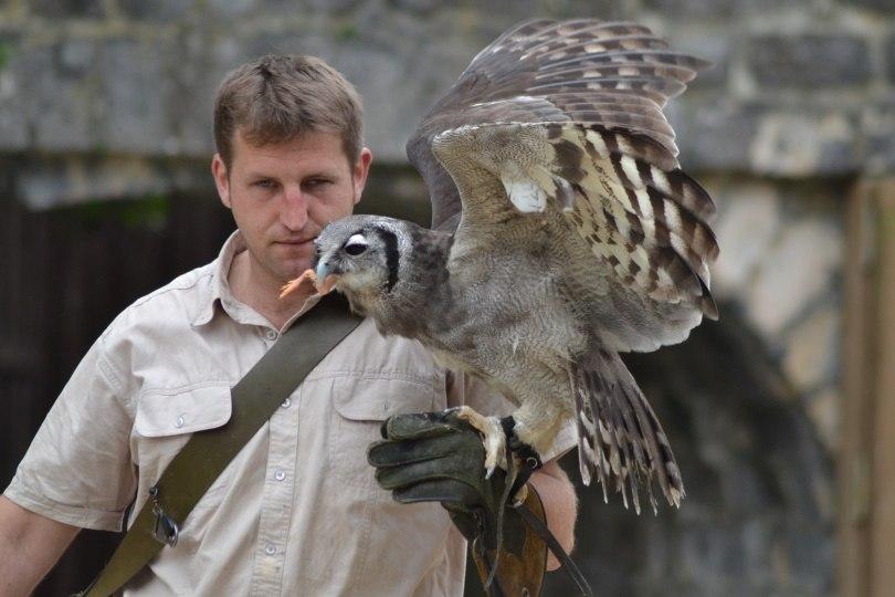 owl owner_dodo 71_Pixabay