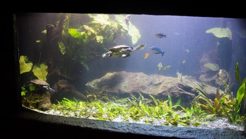 turtle and fish aquarium_Andrej Jakubik_Shutterstock