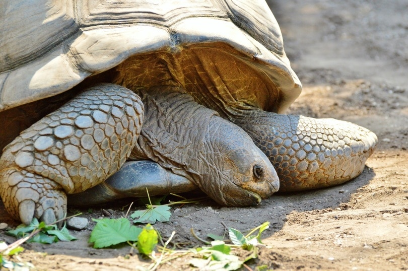 turtle sick_Capri23auto_Pixabay