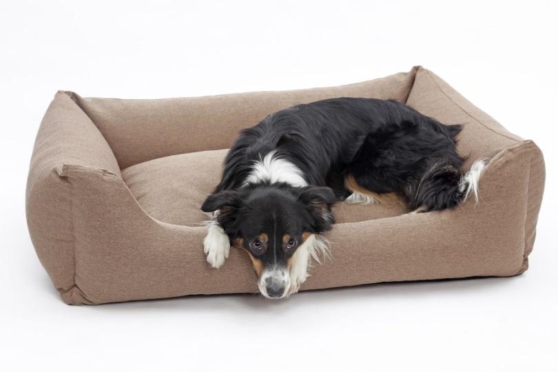 waterproof dog bed_Holger Kirk_Shutterstock
