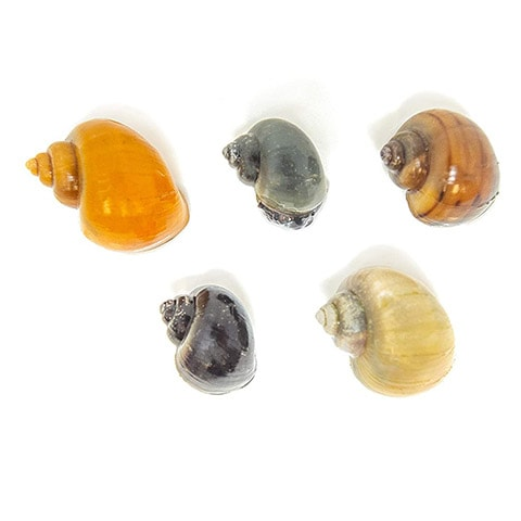 Aquatic Arts Deluxe Mystery Snail Pack