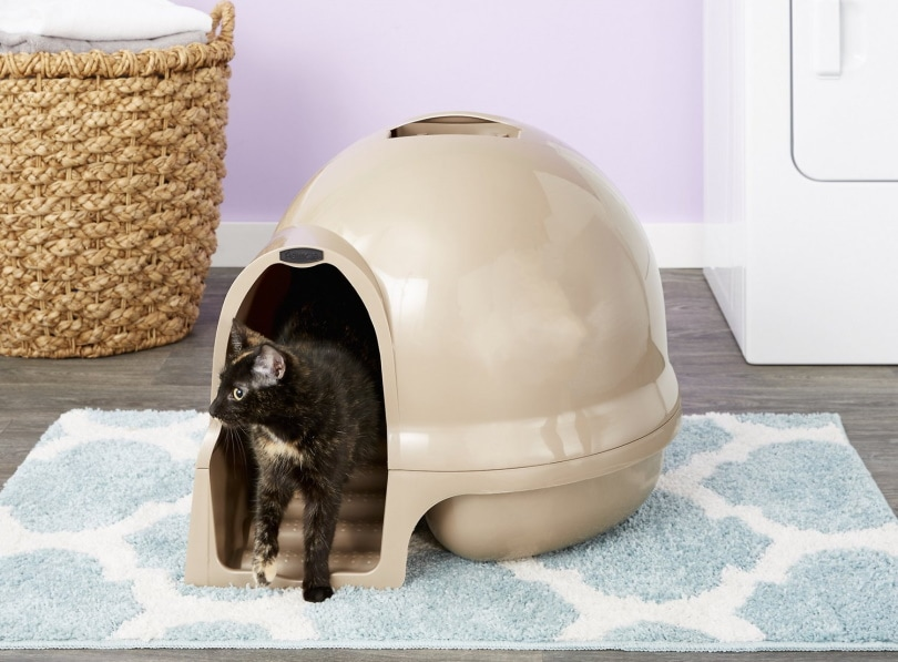 Booda cat litter box_Chewy