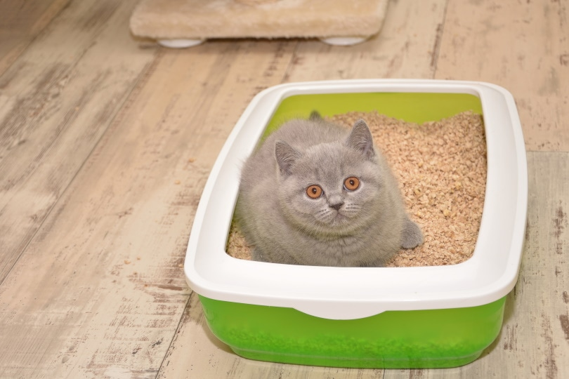 Cat litter box_Lilia Solonari_Shutterstock