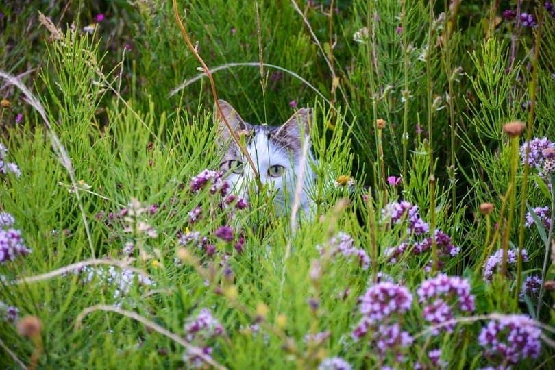 Cat-on-flower-meadow_Ellyy_shutterstock
