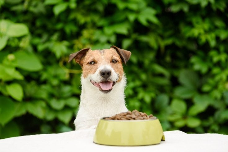 Dog eating happy