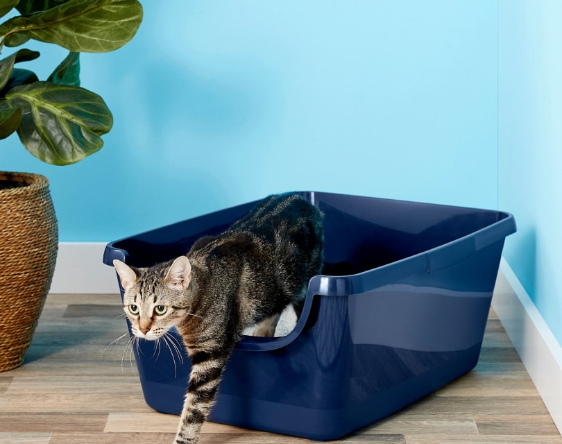 Frisco High Sided Cat Litter Box II_Chewy