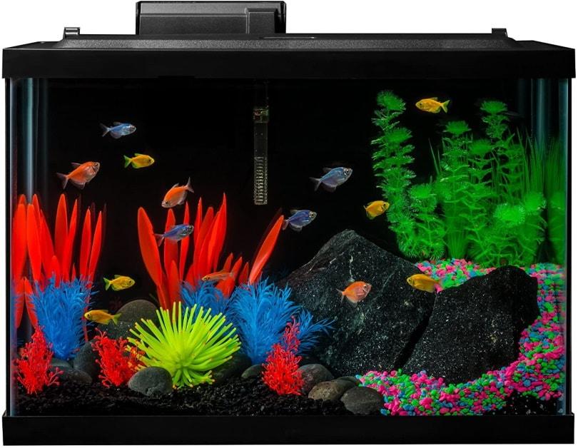 GloFish Aquarium Kit Fish Tank_Amazon