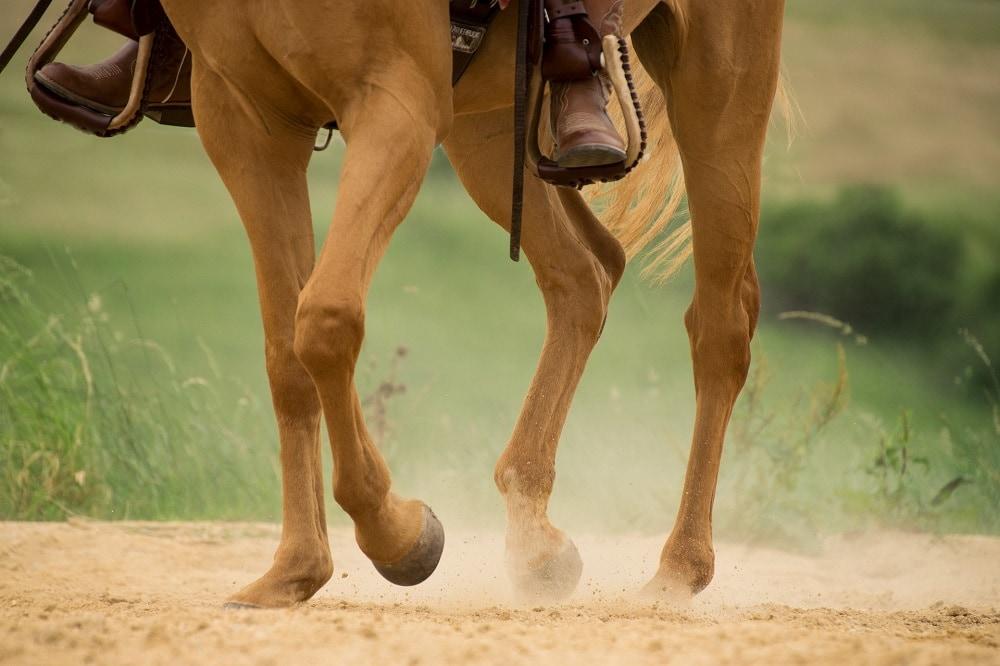 Horse hoof in action