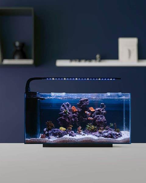 JBJ Rimless Desktop 10-Gallon Flat Panel Peninsula