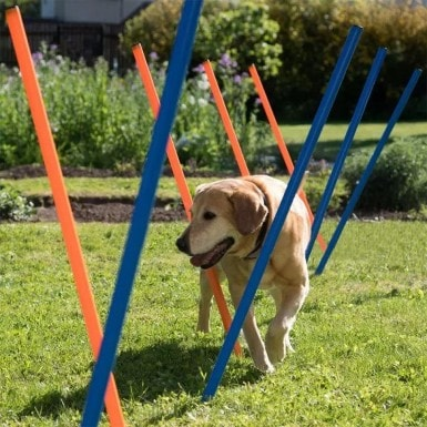 PAWISE Pet Outdoor Games Agility Weave Poles