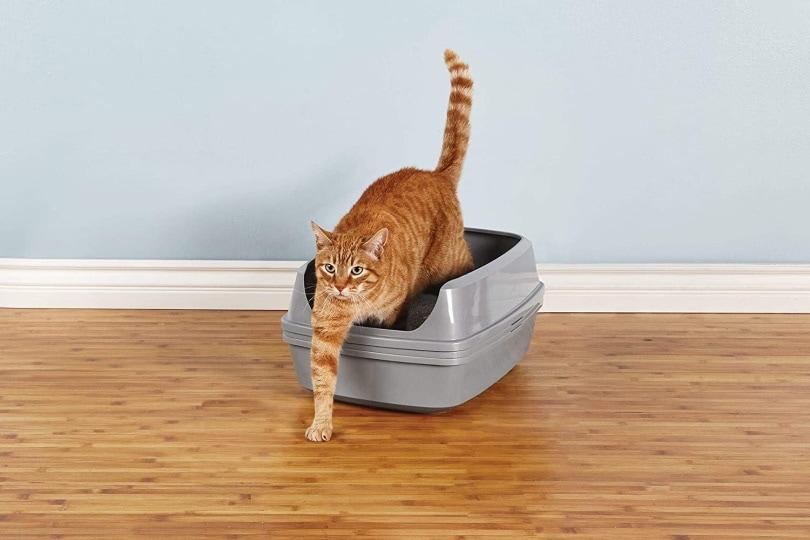 Petco Brand cat litter box_Amazon