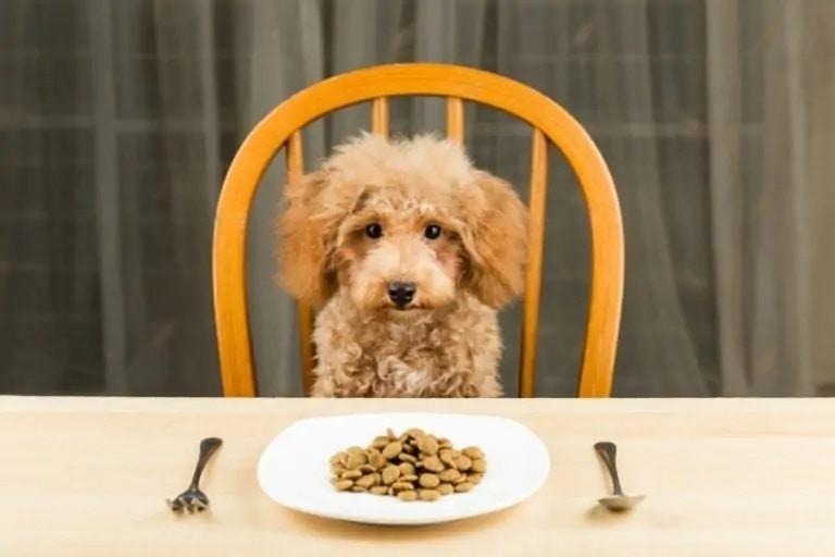 Poodle puppy_Shutterstock_thamKC