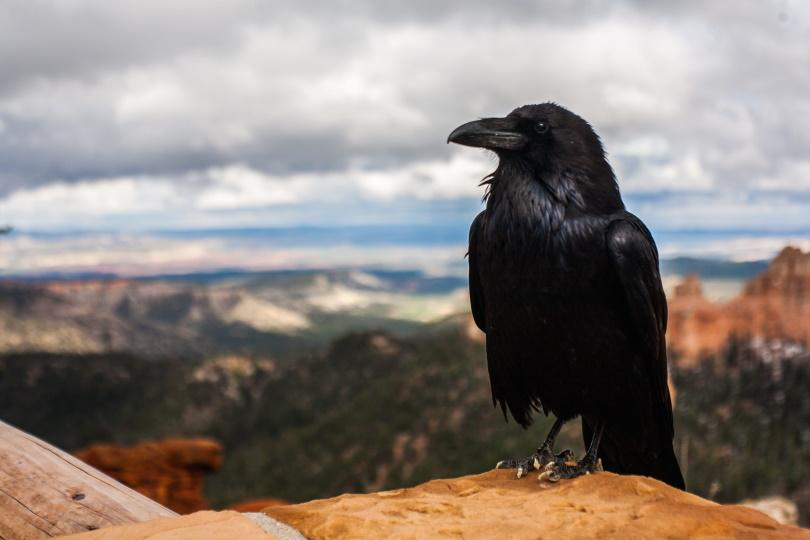 Raven_Piqsels
