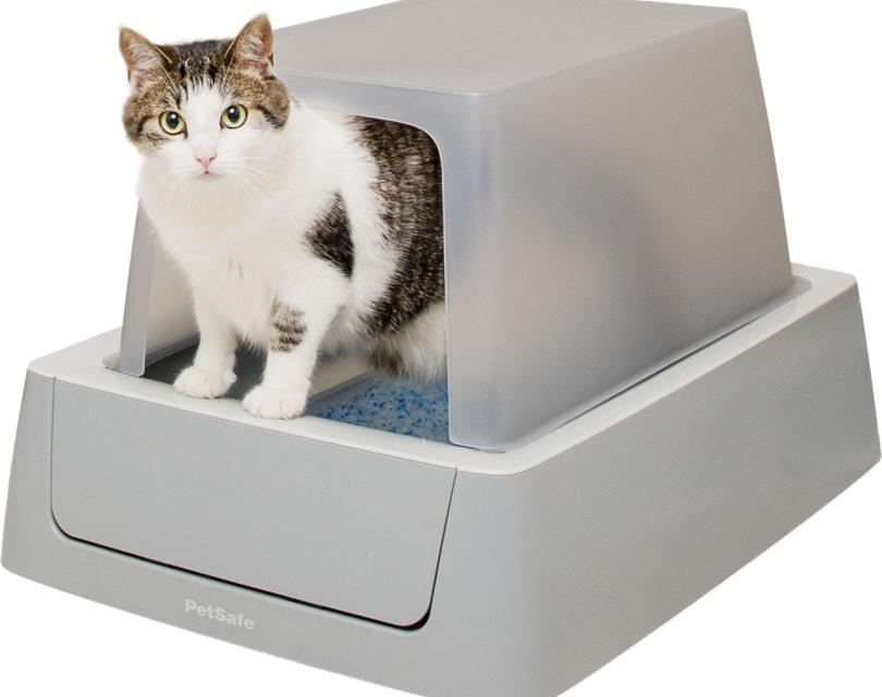 ScoopFree Smart cat litter box_Chewy