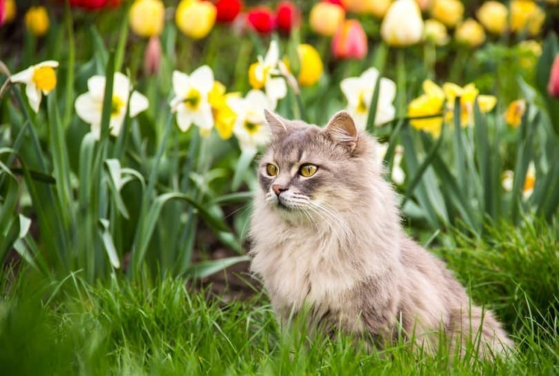 Street-cat-in-the-spring-garden_Diana-Golysheva_shutterstock