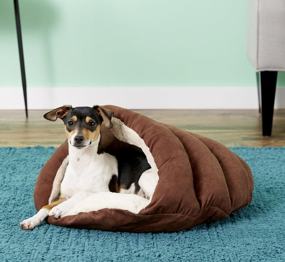 Terrier in Dog Bed Cave in brown