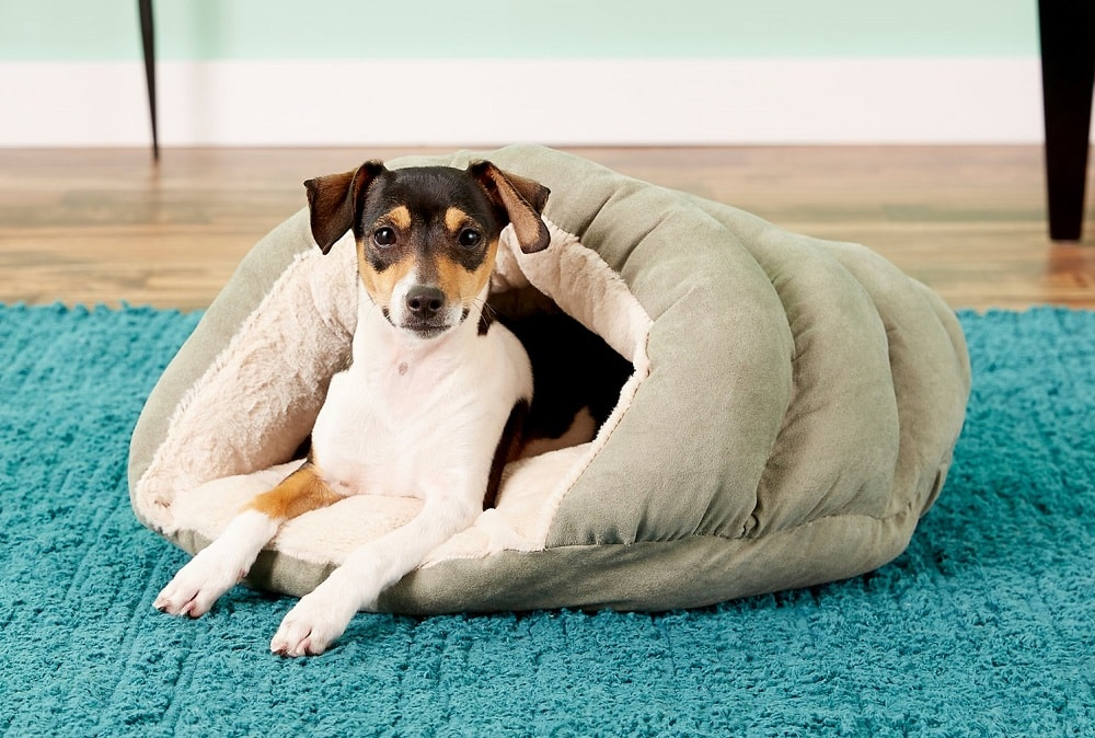 Terrier in Dog Bed Cave