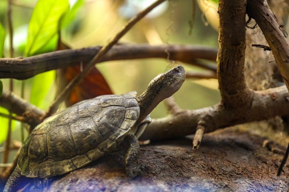 Turtle Plants