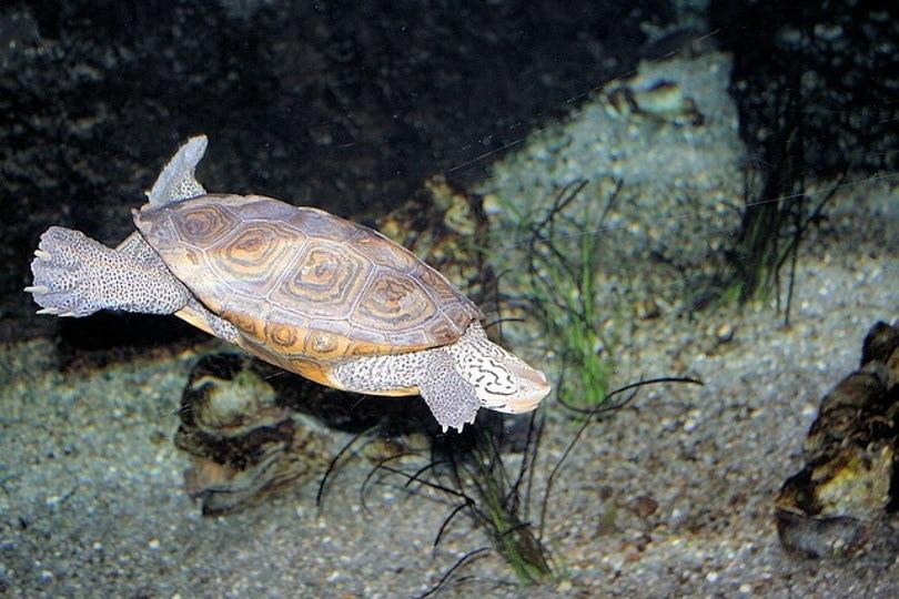 Turtle tank light_PublicDomainPictures_Pixabay