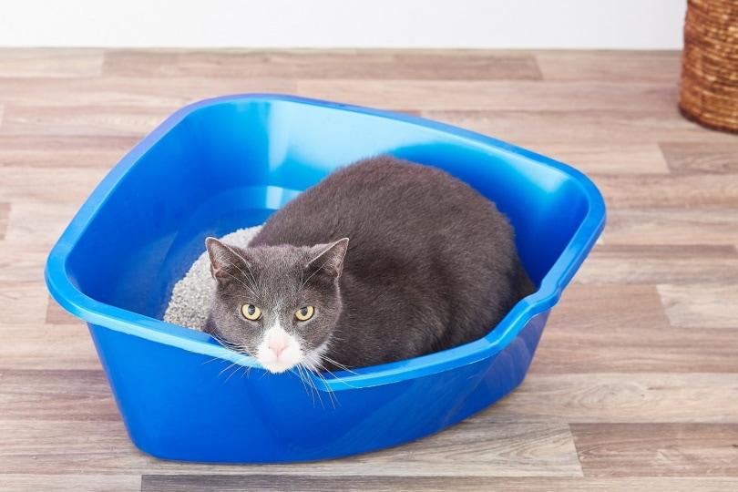Van Ness High Side Corner Cat Litter Pan II_Chewy