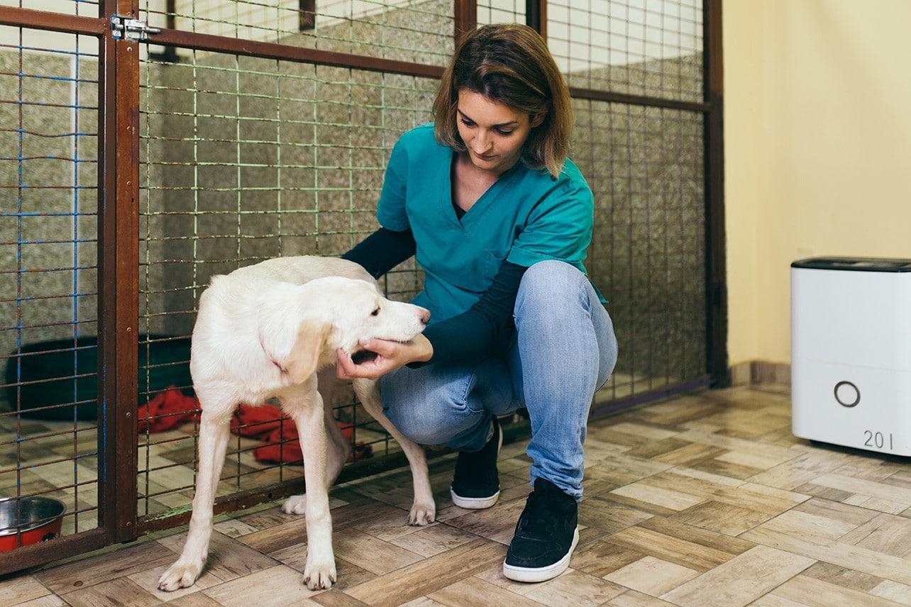 Vet Holding Lost Dog