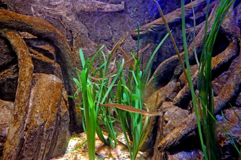 aquarium_Arite Nowak_Pixabay