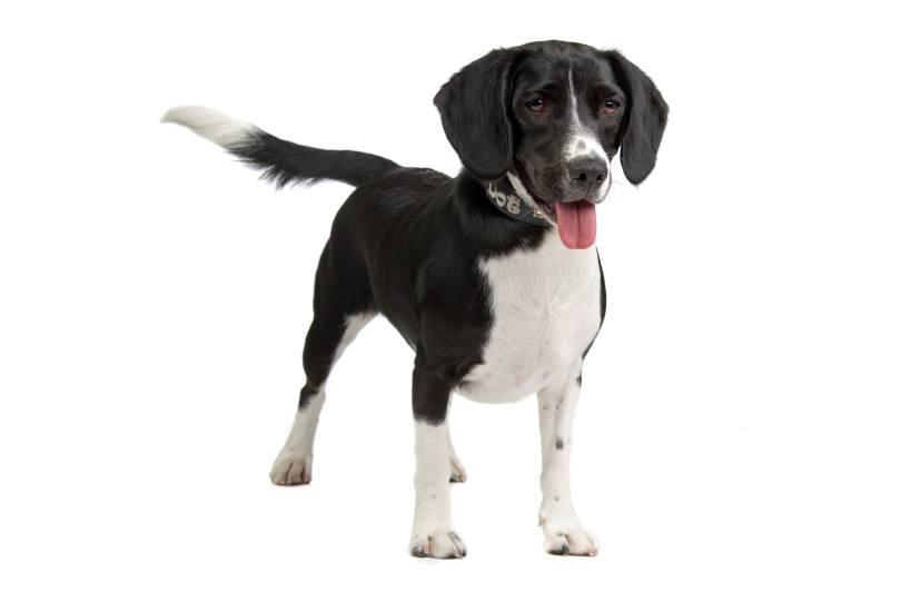 bocker dog_Erik Lam_Shutterstock