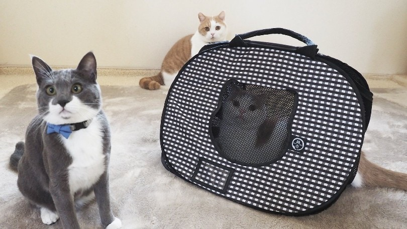 cat carrier for travel