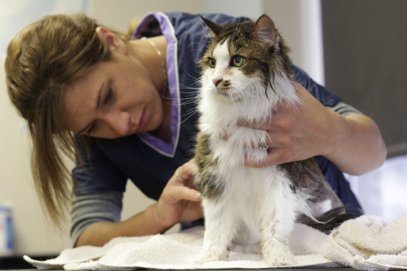 cat grooming_Piqsels