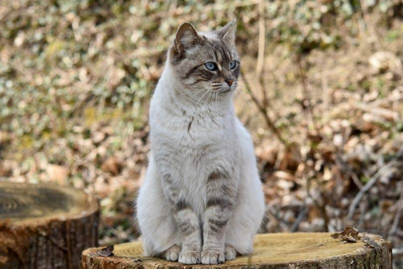 cat sitting_Pixabay