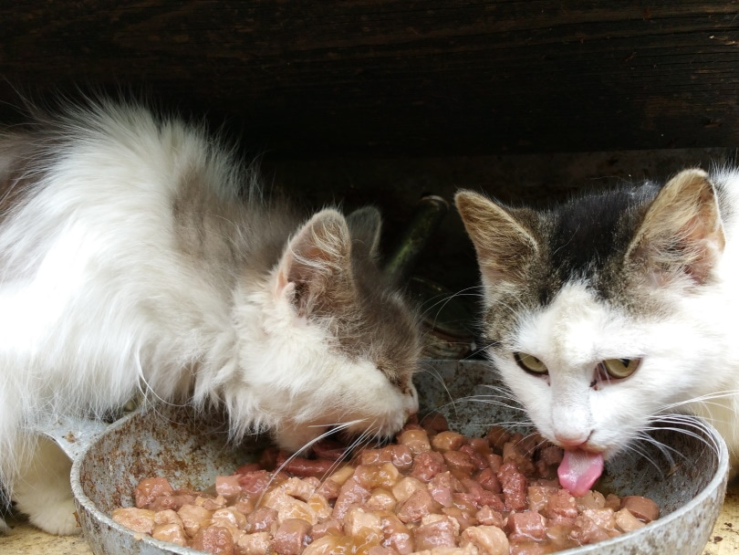 cats eating_Piqsels