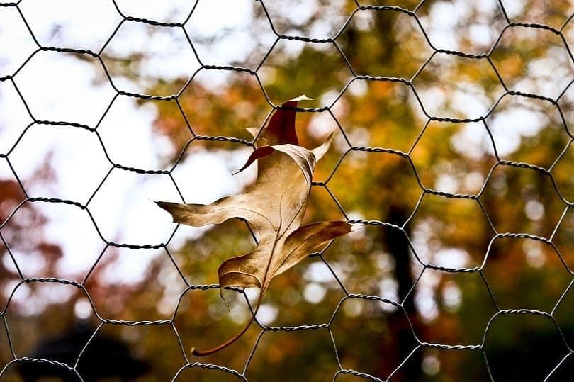 chicken wire-pixabay